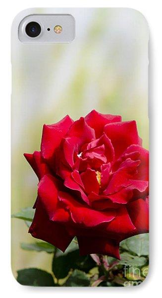 Bright Red Rose IPhone Case by Perry Van Munster