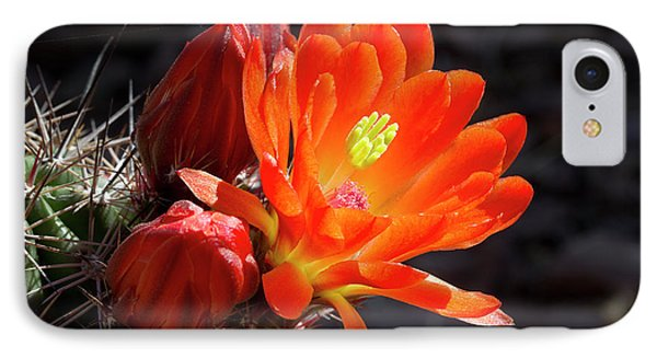 Bright Tangerine Cactus Flower Phone Case by Phyllis Denton