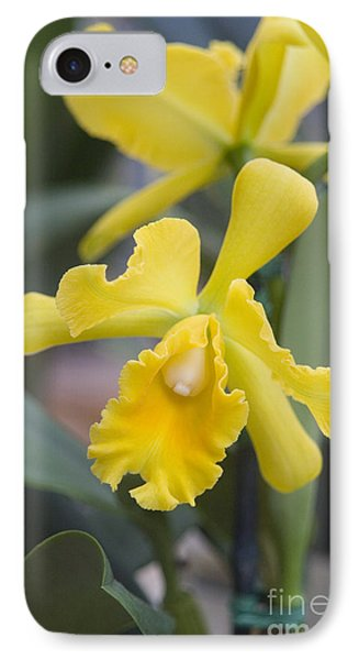 Bright Yellow Cattleya Orchid Phone Case by Allan Seiden - Printscapes