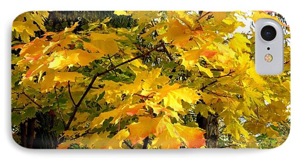 IPhone Case featuring the photograph Brilliant Maple Leaves by Will Borden