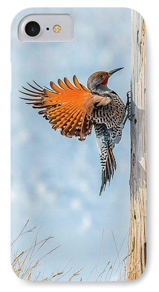 Brilliant Northern Flicker Woodpecker IPhone Case