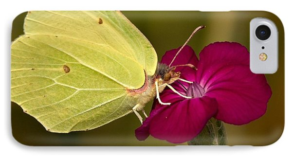 IPhone Case featuring the photograph Brimstone 1 by Jouko Lehto