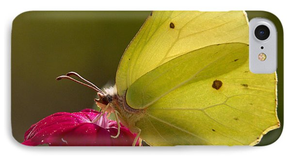 IPhone Case featuring the photograph Brimstone 2 by Jouko Lehto
