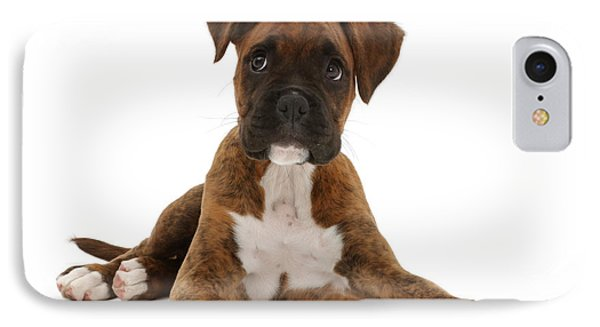 Brindle Boxer Puppy IPhone Case by Mark Taylor