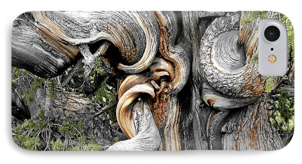 Bristlecone Pine - 'i Am Not Part Of History - History Is Part Of Me' Phone Case by Christine Till