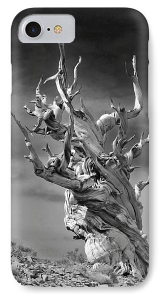 Bristlecone Pine - A Survival Expert IPhone Case