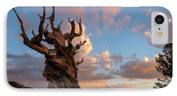 Bristlecone Pine Sunset IPhone Case