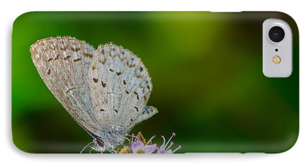 British Butterfly Or Little Blue IPhone Case by Bruce Pritchett