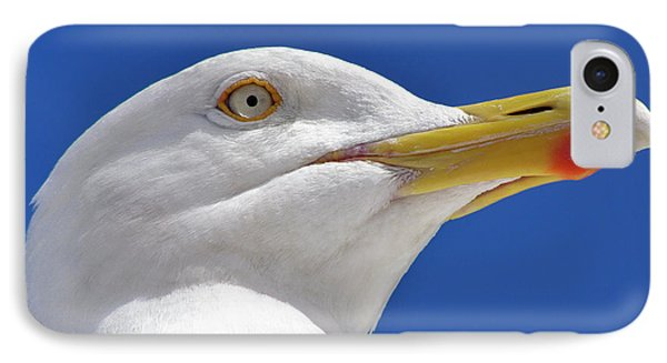 IPhone Case featuring the photograph British Herring Gull by Terri Waters