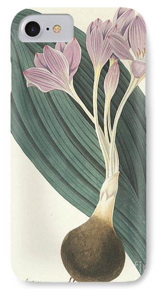 Broad-leaved Meadow Saffron IPhone Case by Margaret Roscoe