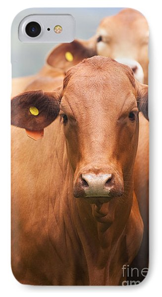 Brown Cow IPhone Case by Jorgo Photography - Wall Art Gallery