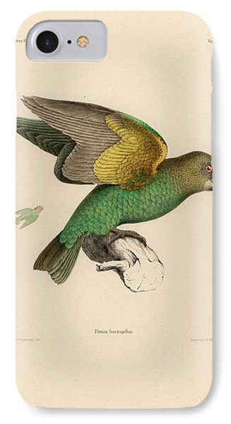Brown-headed Parrot, Piocephalus Cryptoxanthus IPhone Case by J D L Franz Wagner