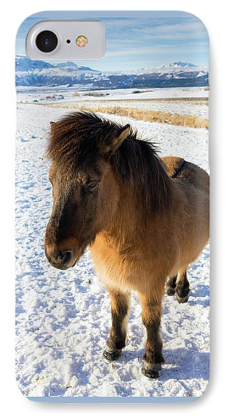 IPhone Case featuring the photograph Brown Icelandic Horse In Winter In Iceland by Matthias Hauser