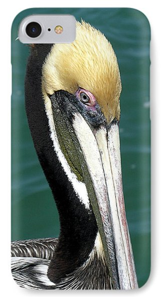 Brown Pelican  Phone Case by Allan  Hughes