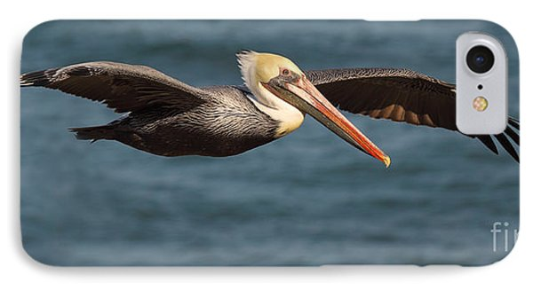 IPhone Case featuring the photograph Brown Pelican Flying By by Max Allen
