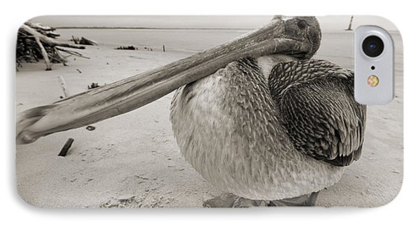Brown Pelican Folly Beach Morris Island Lighthouse Close Up IPhone Case
