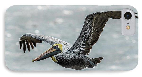 Brown Pelican In Flight IPhone Case by Paul Freidlund