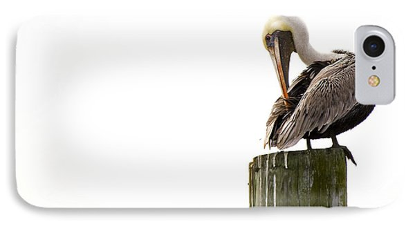 Brown Pelican On Piling IPhone Case by Bob Decker