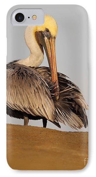IPhone Case featuring the photograph Brown Pelican Preening Feathers On Shifting Sands by Max Allen