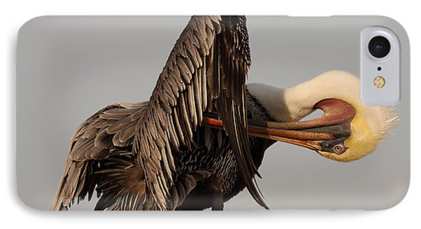IPhone Case featuring the photograph Brown Pelican With An Acrobatic Lean And Preen by Max Allen