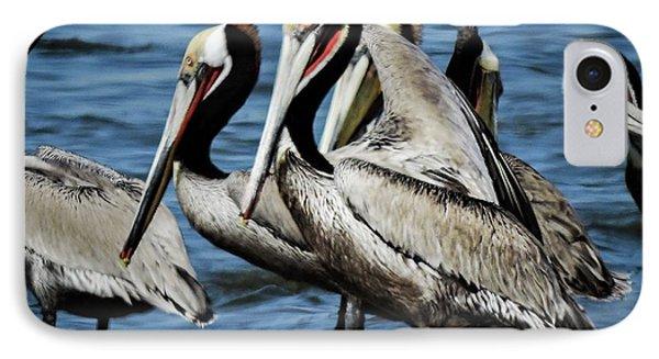 Brown Pelicans Preening IPhone Case