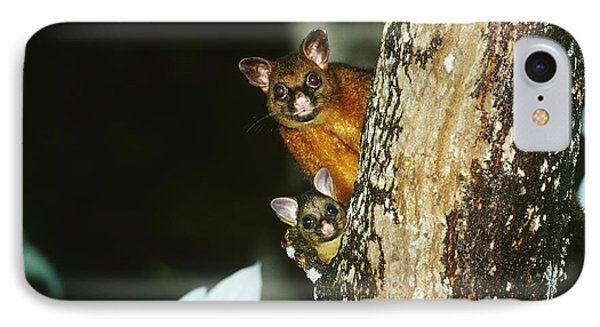 Brush-tailed Possum With Young IPhone Case