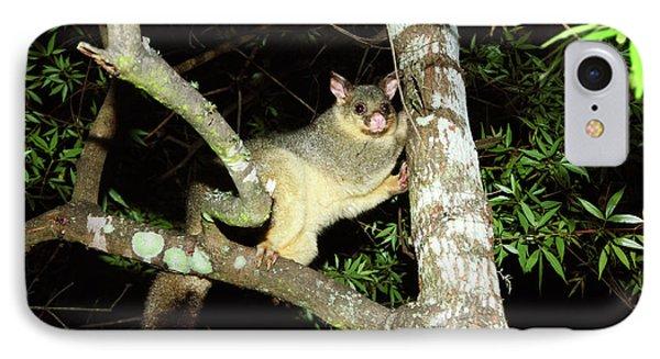 Brushtail Possum IPhone Case