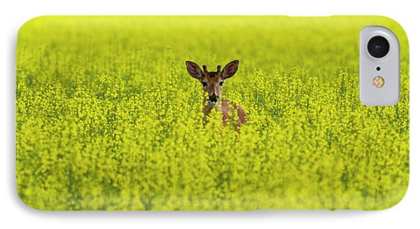 Buck In Canola IPhone Case by Mark Kiver