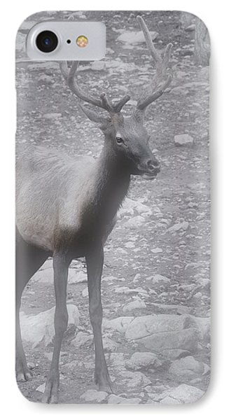 Buck In Fog On Hurricane Ridge - Olympic National Forest - Olympic National Park Wa Phone Case by Christine Till