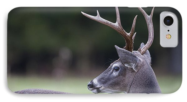 IPhone Case featuring the photograph Buck by Tyson and Kathy Smith