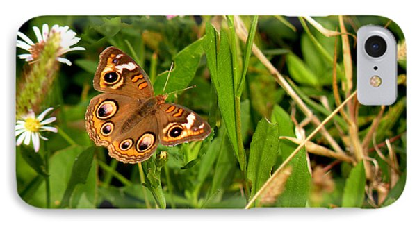 Buckeye Butterfly In Nature IPhone Case by Rosalie Scanlon