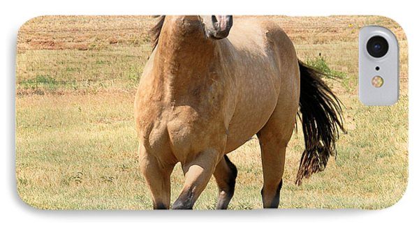 Buckskin Stallion From Front IPhone Case by Cheryl Poland
