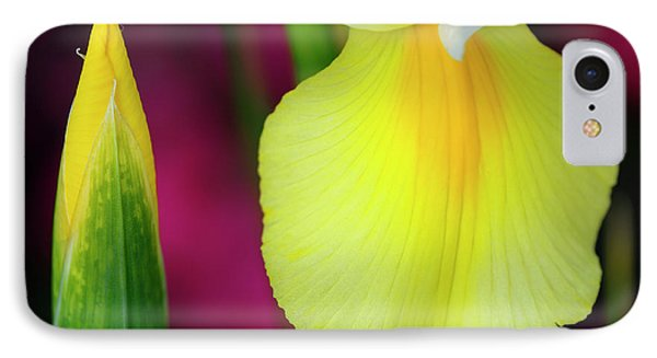 Bud And Yellow Fall Of Dutch Iris With Purple Flowers In Backgro IPhone Case