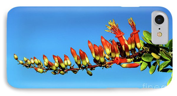 IPhone Case featuring the photograph Budding Ocotillo by Robert Bales