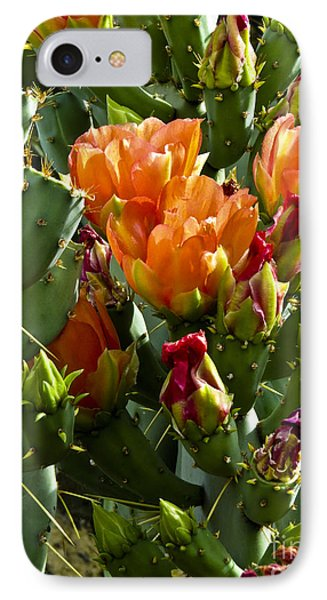 Buds N Blossoms IPhone Case by Kathy McClure