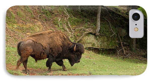 Buffalo Walking Along Streambed IPhone Case