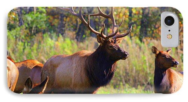 Buffalo River Elk IPhone Case