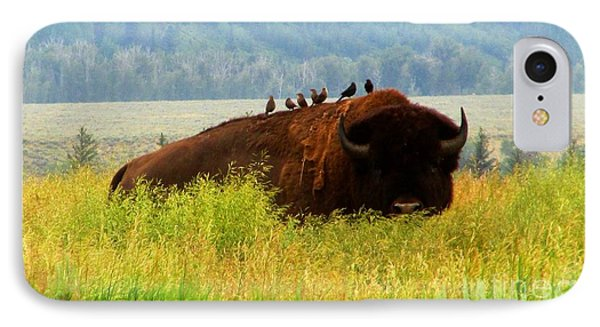 Buffalo Wings IPhone Case by Janice Westerberg