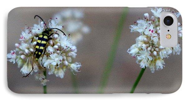 Bug On Flower IPhone Case