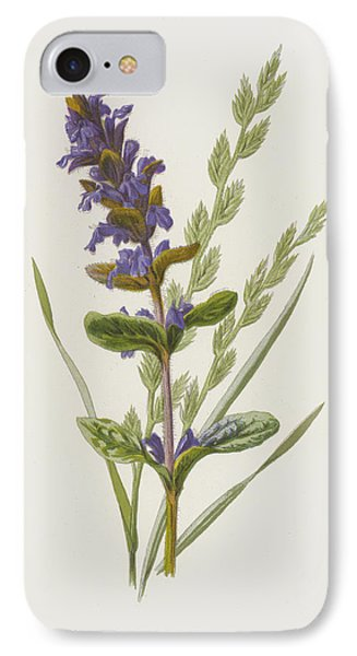 Bugle And Tall Fescue Grass IPhone Case by Frederick Edward Hulme