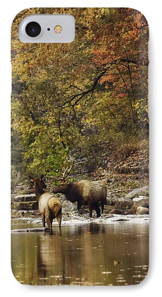 Bull And Cow Elk In Buffalo River Crossing IPhone Case