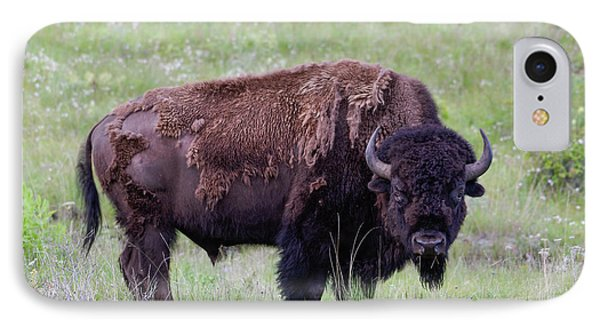 Bull Bison Starring Into The Camera IPhone Case