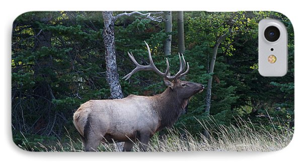IPhone 7 Case featuring the photograph Bull Elk 2 by Aaron Spong