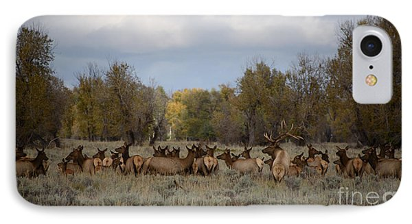 Bull Elk And Harem IPhone Case