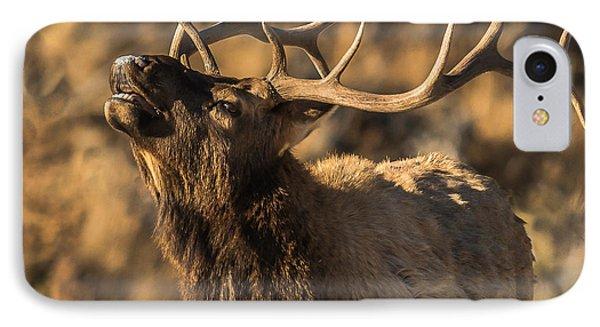 Bull Elk Bugle In Fall IPhone Case