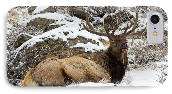 Bull Elk Lounging IPhone Case by Scott Nelson