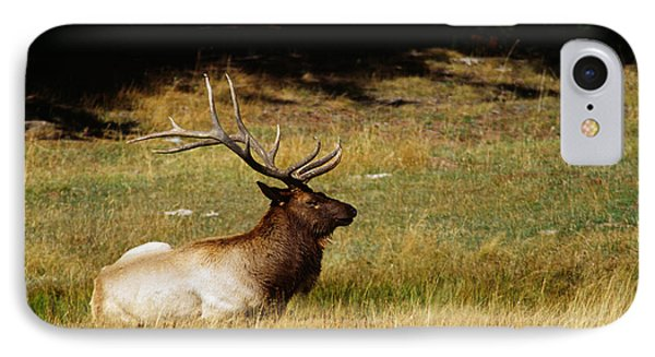 Bull Elk Lying In Meadow, Profile IPhone Case by Panoramic Images