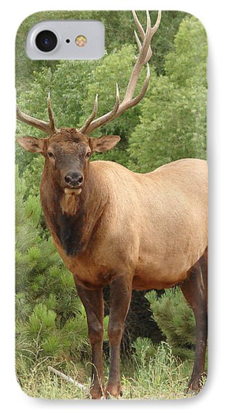 Bull Elk In Evergreen Coloado IPhone Case