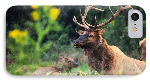 IPhone Case featuring the photograph Bull Elk Rutting In Boxley Valley by Michael Dougherty