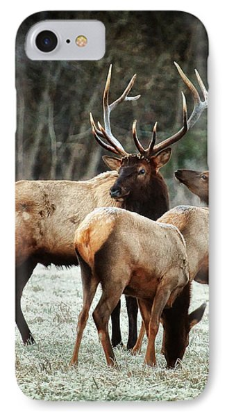 IPhone Case featuring the photograph Bull Elk With Cows In The Late Rut by Michael Dougherty